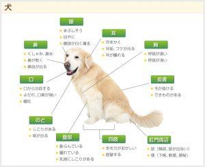 犬の症状のイメージ