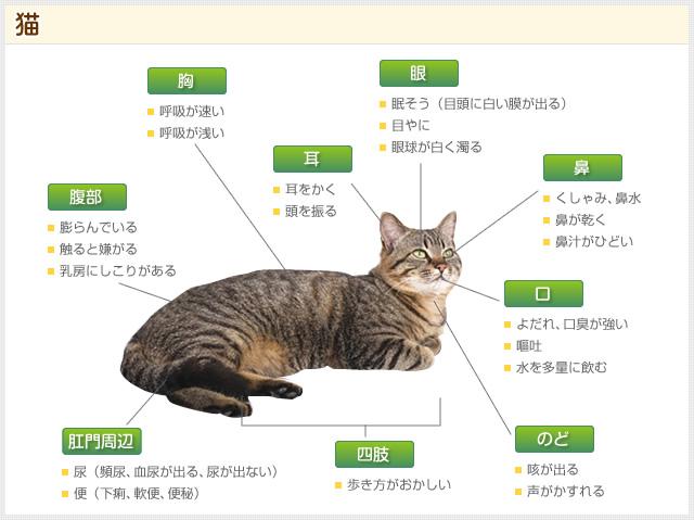 猫の症状のイメージ