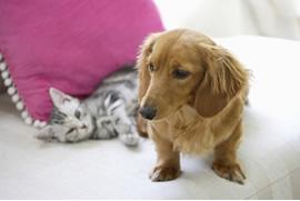 子犬・子猫を迎えたらまずご来院ください